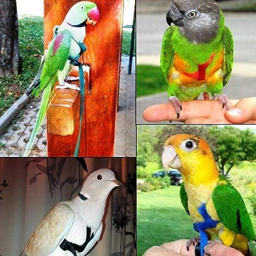 Loro Pájaro Leash y arnés exterior Anti Bite Bird Tracción Cuerda ...
