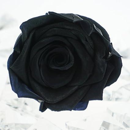 dfc70acf2f9e Amazon.com  INVISIKAYAK Preserved fresh Roses Flower Head