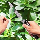 Hori-Hori-Garden-KnifePerfect-Garden-Tool-for-Gardening-Weeding-Landscaping-Diggingwith-Good-looking-Gift-Box-and-Free-PaperKnife