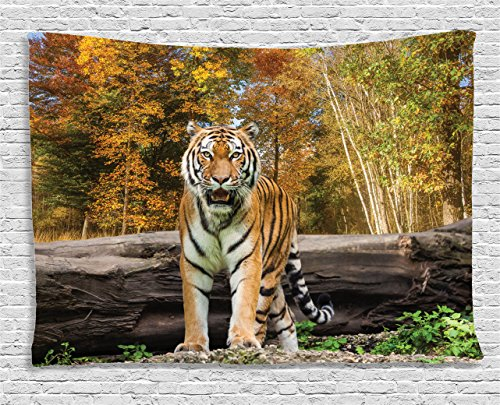 Ambesonne Safari Tapestry, Tiger in The Forest Standing and Gazing at The Camera Beast Habitat Picture, Wide Wall Hanging for Bedroom Living Room Dorm, 80