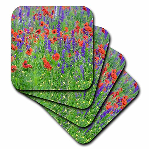 - 3dRose Danita Delimont - Flowers - Poppy field with wildflowers, Mount Olive, North Carolina, USA - set of 4 Ceramic Tile Coasters (cst_279269_3)