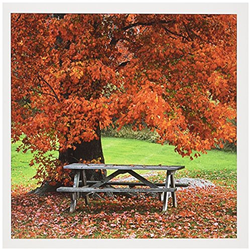 Desk Country Maple (3dRose Greeting Cards, 6 x 6 Inches, West Park Bench Under Maple in Autumn, Usa (gc_190601_1))