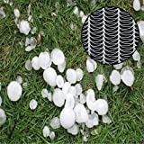 Agfabric Anti Hail Netting - Bird Netting Alternative - Protect Fruits and Plants from Hail Damage, 19.7ft. x 50ft.