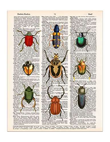 Beetles, Insects, Arthropods, Dictionary Page Art Print, 8x11 UNFRAMED