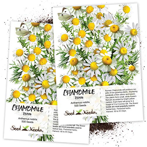 Seed Needs, Roman Chamomile (Anthemus nobilis) Twin Pack of 500 Seeds Each Non-GMO (Seed Roman Chamomile)