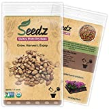 CERTIFIED ORGANIC SEEDS (Appr. 115) - Quincy Pinto Dry Bean Seeds - Heirloom Seeds Beans Collection - Non GMO, Non Hybrid Vegetable Seeds, USA