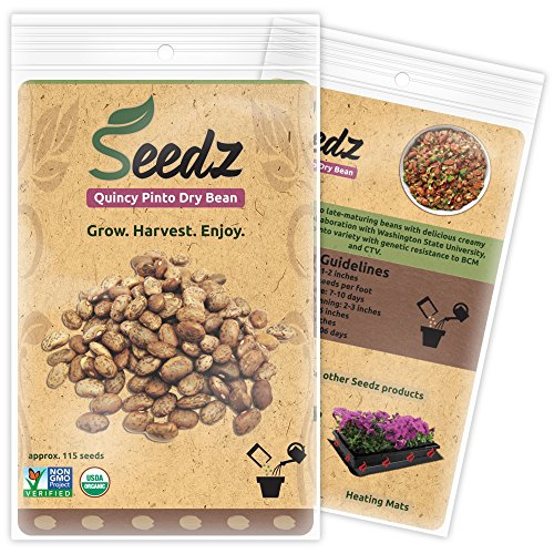 CERTIFIED ORGANIC SEEDS (Appr. 115) - Quincy Pinto Dry Bean Seeds - Heirloom Seeds Beans Collection - Non GMO, Non Hybrid Vegetable Seeds, - Bean Collection