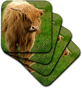 3dRose Scotland, Highland Cow, Farm animal-EU36 CMI0128-Cindy Miller Hopkins-Soft Coasters, Set of 8 (CST_82799_2)