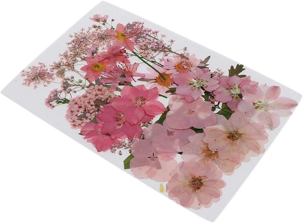 T TOOYFUL Echte Getrocknete Blumen Bl/ätter Gepresste Blumen F/ür Album Rahmen Dekor Rose