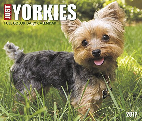 Just Yorkies 2017 Box Calendar (Dog Breed Calendars)