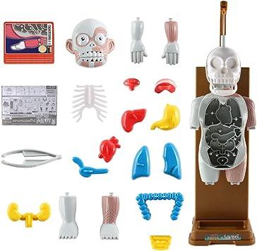 Modelo de Cuerpo Humano con Órganos Extraíbles, Divertido Juguete Juego de Mesa para Fiestas: Amazon.es: Juguetes y juegos