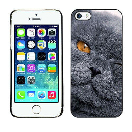 GooooStore/Housse Etui Cas Coque - Grey Shorthair Cat Scottish Fold Yellow Eye - Apple iPhone 5 / 5S