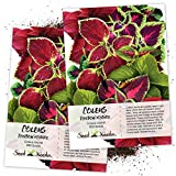 Seed Needs, Rainbow Coleus Mix (Coleus blumei) Twin Pack of 800 Seeds Each