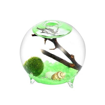"Pet Terrarium Kit- 2.4"" Footed Glass Orb with Green Sands, Living Moss Ball"