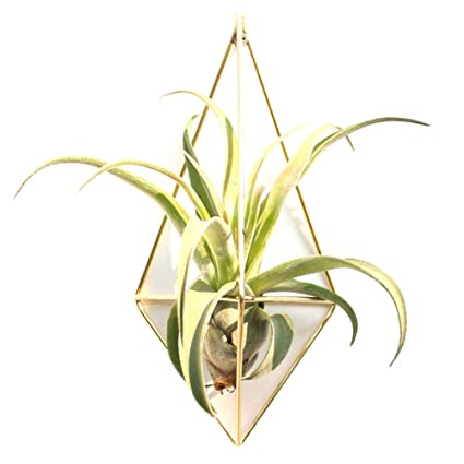 Amazon.com: Sundlight 2 Pack Hanging Planter Geometric Wall Decor ...