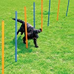 PAWISE Pet Dogs Outdoor Games Agility Exercise Training Equipment Agility Starter Kit Jump Hoop Hurdle Bar 15