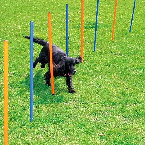 Agility Weave Poles (Pet Dogs Outdoor Games Agility Exercise Training Equipment Agility Starter Kit with 12 Weave Poles)
