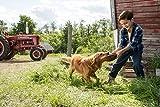 A Dogs Purpose (Blu-ray + DVD + Digital HD)