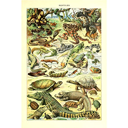 Retro Vintage Poster Print Wall Art Decor Animals Species Identification Collection Reference Chart Reptiles Turtle Snake Biology - Art Poster Animal Vintage
