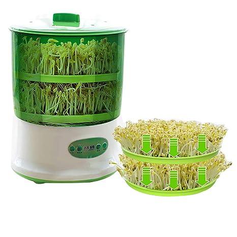como cocinar brotes de soja verde