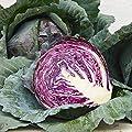 David's Garden Seeds Cabbage Red Acre D22104 (Purple) 25 Organic Heirloom Seeds