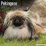 Pekingese Calendar 2017 - Dog Breed Calendars - 2016 - 2017 wall calendars - 16 Month by Avonside