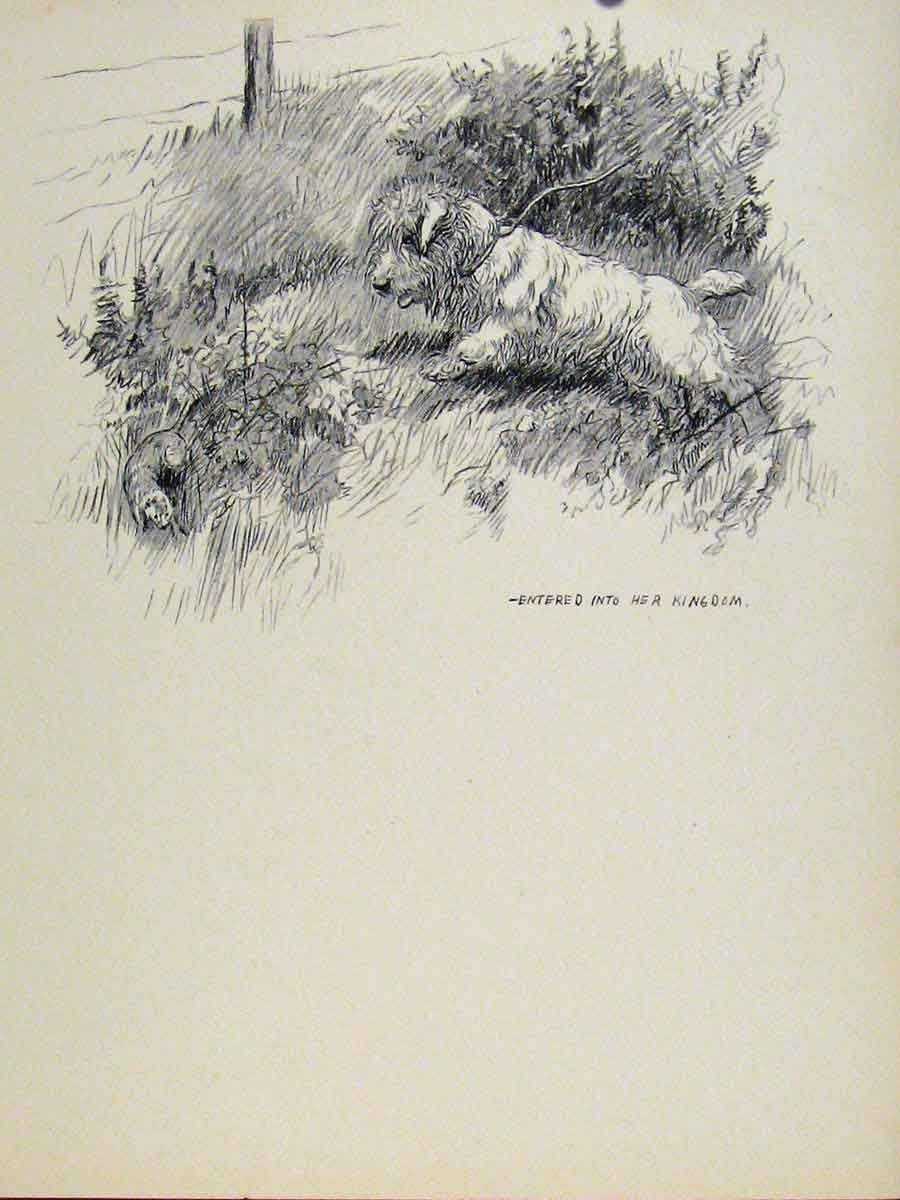 Dog Hound Pet Art Sketch Drawing Print Old C1938 Pencil old-print 7131938152