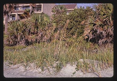 - 16 x 24 Gallery Wrapped Framed Art Canvas Print of Palmetto Dunes Plantation, Hilton Head Island, South Carolina 1985 Roadside Americana Ready to Hang 44a