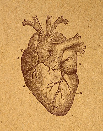 Antique Heart Print Vintage Wall Art Heart Illustration Anatomy Themed Medical Wall Poster or