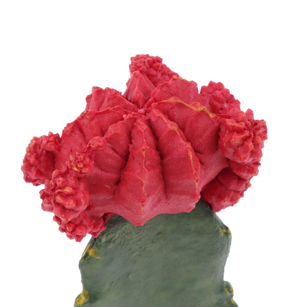 B Blesiya Plastic Terrarium Cactus Plant Animals Habitat for Amphibian Reptile by B Blesiya (Image #3)
