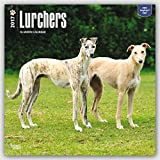 Lurchers 2017 - 12inch x 12inch Hanging Square Wall Photographic Dog Puppy Planner Calendar