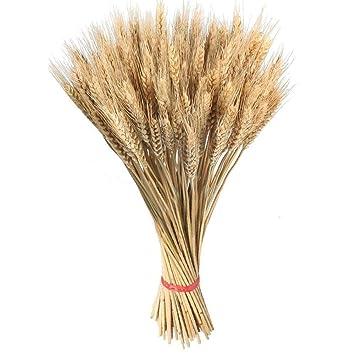 100pcs tiges de blé séchées pour la décoration naturelle fleurs séchées en  grappes gerbes branche bouquet automne arrangements vase artisanat