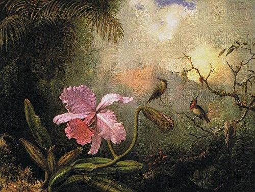 Carrleya Orchid with Two Hummingbirds by Martin Johnson Heade - 16