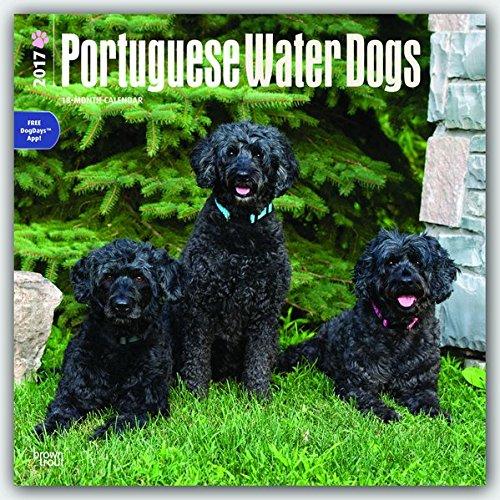 portuguese water dog calendar - 9