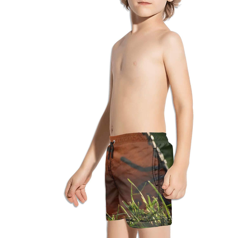 Etstk Funny Baseball with Baseball Glove Kids Comfortable Shorts for Boys