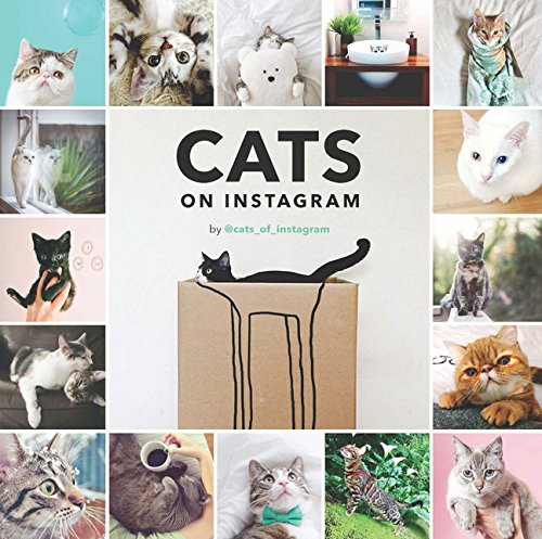 Cats on Instagram by imusti