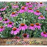 4 Packs x 300 PURPLE CONEFLOWER Seed - Echinacea purpurea FLOWER SEEDS - 6 Inch LG PURPLE BLOOMS - FULL SUN or PARTIAL SHADE - Zones 3-9 - By MySeeds.Co