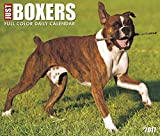 Just Boxers 2017 Box Calendar (Dog Breed Calendars)