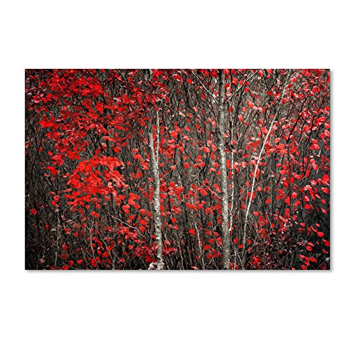 The Hush Before Winter by Philippe Sainte-Laudy Wall Decor, 22 by 32-Inch Canvas Wall Art
