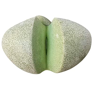 Pleiospilos Nelii Split Rock Living Rock Cleft Stone (4 inch Pot) : Garden & Outdoor