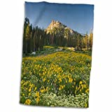 3dRose Danita Delimont - Flowers - Wildflowers, Willard Basin near Mantua, Utah, USA - US45 HGA0384 - Howie Garber - 12x18 Hand Towel (twl_147285_1)