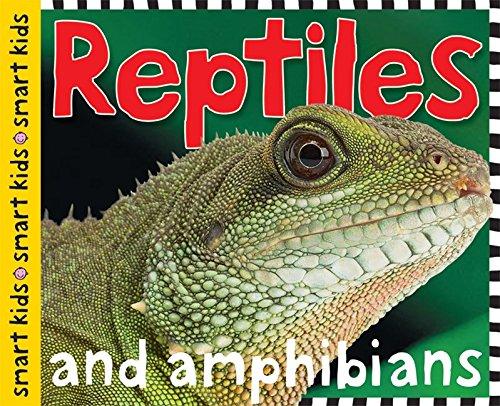 reptiles - 4