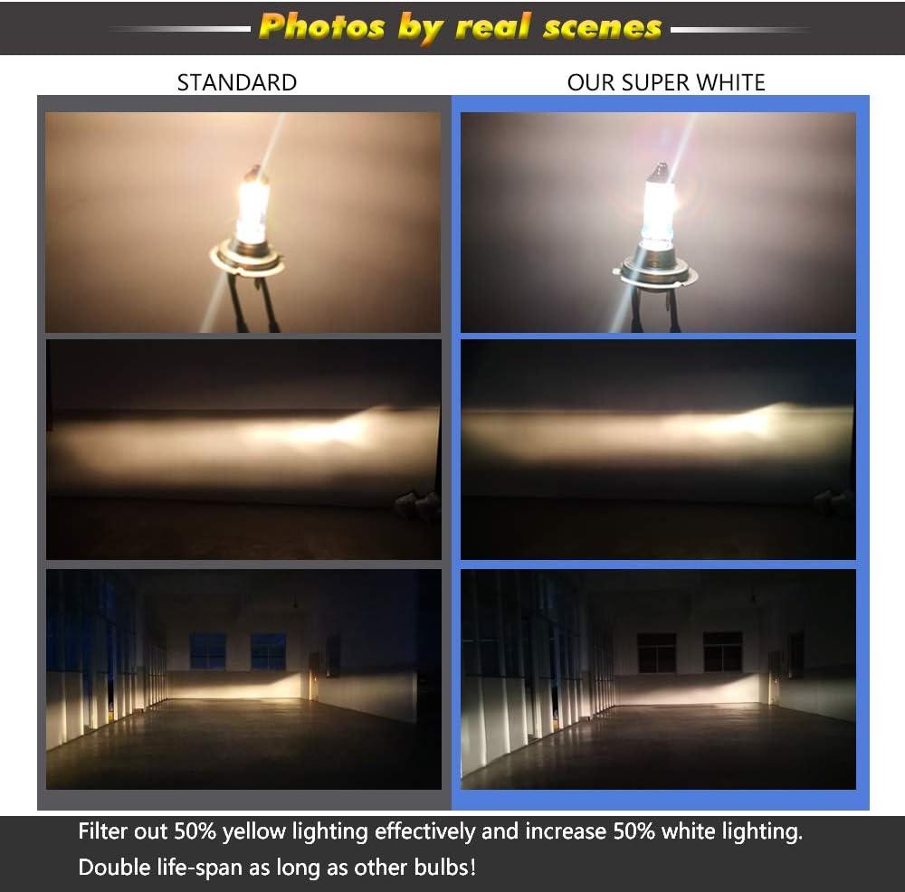 2 Pack,Long Life H11B Halogen Headlight Bulb with Super White Light PGJY19-2 12V//55W 5000K