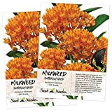 Seed Needs, Butterfly Milkweed/Monarch Flower (Asclepias tuberosa) 2 Packages of 100 Seeds Untreated