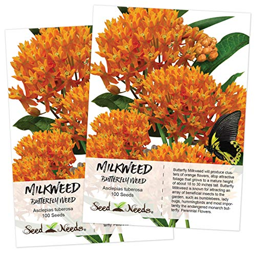 - Seed Needs, Butterfly Milkweed (Asclepias tuberosa) Twin Pack of 100 Seeds Each