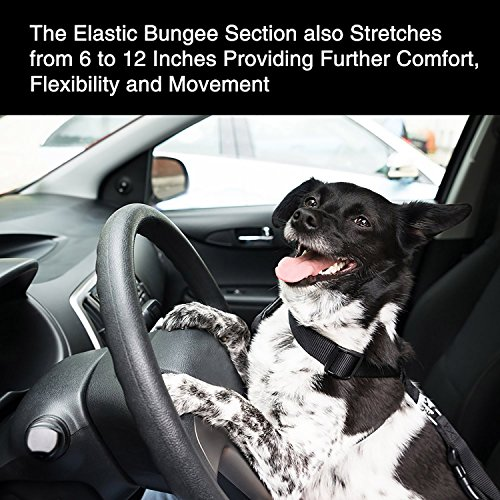 Can Dog Lie Down In Car With Seat Harness On