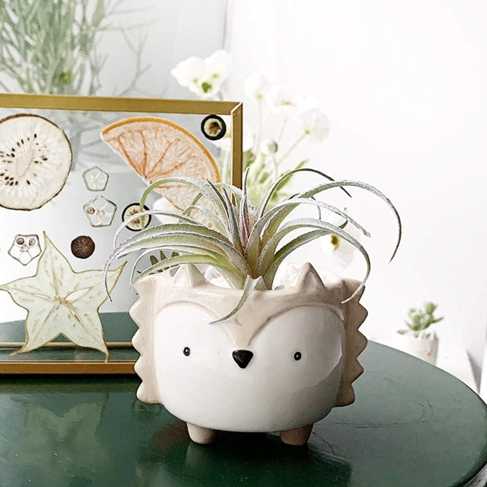Pinxuan Cute Animal Ceramic Succulent Cactus Flower Pots, for Mini Plant Home Garden Office Desktop Decoration (Plant Not Included)(A)
