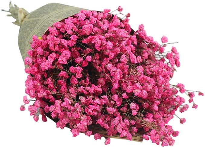 N A 35 x Pampasgras Getrocknetes Deko Weiss nat/ürlicher Blumenstrau/ß f/ür Inneneinrichtungen Fotografie Hochzeit wei/ß