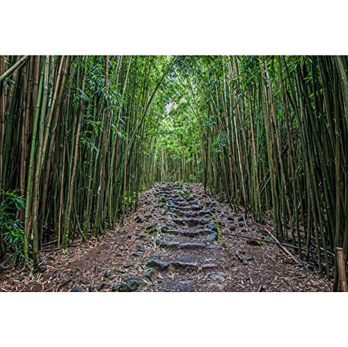 (Leyiyi 12x10ft Forest Exploration Themed Backdrop Bamboo Forest Stone Mud Road Outdoor Activities Summer Camp Anniversaries Jungle Safari Portrait Shooting Travel Photo Studio Vedio Props)