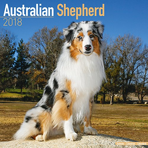 Australian Shepherd Calendar - Dog Breed Calendars - 2017 - 2018 wall Calendars - 16 Month by Avonside